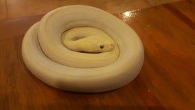 Serpiente imagen de archivo libre de regalías