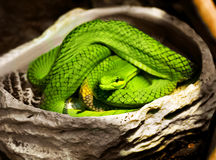 Serpiente Imagenes de archivo