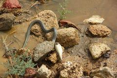 Serpiente Fotos de archivo