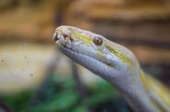 Serpiente Fotos de archivo libres de regalías