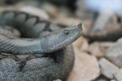 Serpiente Fotografía de archivo