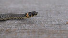 Serpiente almacen de video