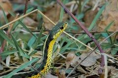 Serpiente amarilla en hierba imagen de archivo libre de regalías