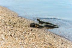 Serpiente de agua Foto de archivo libre de regalías