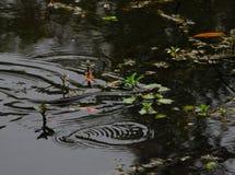Serpiente de agua hinchada amarillo Imagen de archivo libre de regalías