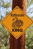 Serpiente de cascabel de la muestra Imagenes de archivo