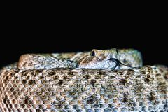 Serpiente de cascabel de Diamondback que chasquea la lengua - arte, pintura al óleo de Digitaces foto de archivo libre de regalías