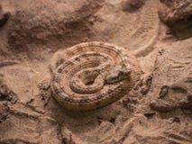 Serpiente de cascabel en la arena Fotos de archivo libres de regalías