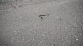 Serpiente de hierba que se arrastra en el asfalto en el parque de la ciudad almacen de metraje de vídeo