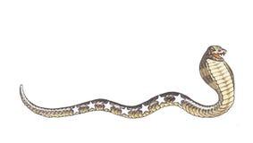 Serpiente de la cobra Fotos de archivo