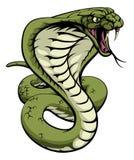 Serpiente de la cobra real Foto de archivo libre de regalías