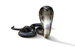 Serpiente de la cobra real Imagenes de archivo