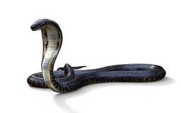 Serpiente de la cobra real Imágenes de archivo libres de regalías