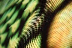 Serpiente de la imagen de la pantalla del LED Fotos de archivo
