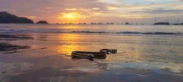 Serpiente de mar hinchada amarillo 2 Fotografía de archivo libre de regalías