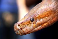 Serpiente de oro imagenes de archivo