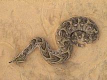 Serpiente de soplo Foto de archivo