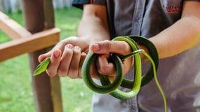 Serpiente de vid verde Fotografía de archivo