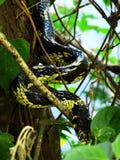 Serpiente del Amazona Fotos de archivo libres de regalías