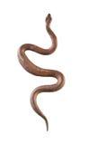 Serpiente del metal Fotografía de archivo libre de regalías
