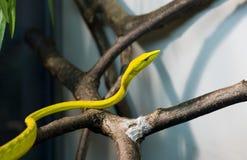 Serpiente del veneno Fotografía de archivo