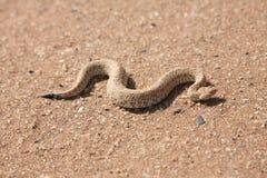 Serpiente en desierto imágenes de archivo libres de regalías