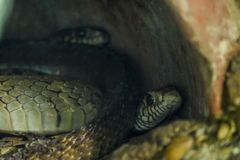 Serpiente en el bosque imágenes de archivo libres de regalías