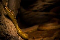 Serpiente en el parque zoológico Olomouc - Checo foto de archivo
