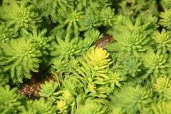 serpiente en la hierba verde Imagen de archivo libre de regalías