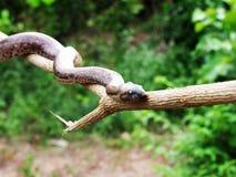 Serpiente en la madera fotografía de archivo