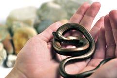 Serpiente en la mano Fotografía de archivo libre de regalías