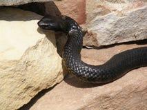 Serpiente en las rocas Imágenes de archivo libres de regalías