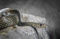 Serpiente en oscuro Foto de archivo libre de regalías