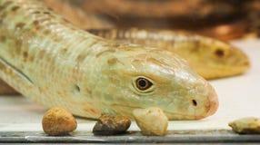 Serpiente en parque zoológico Imagen de archivo