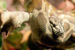 Serpiente en selva Fotografía de archivo libre de regalías