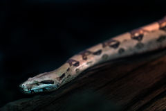 Serpiente en terrario Fotografía de archivo