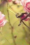 Serpiente en una flor Imagen de archivo libre de regalías
