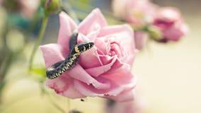 Serpiente en una flor Imagen de archivo
