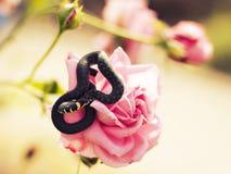 Serpiente en una flor Fotos de archivo
