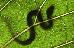 serpiente en una hoja verde Foto de archivo