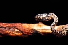 Serpiente encendido Fotografía de archivo