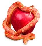 Serpiente envuelta alrededor de una manzana Imagenes de archivo