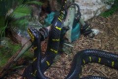 Serpiente exótica Imágenes de archivo libres de regalías