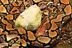 Serpiente grande Fotografía de archivo libre de regalías