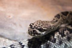 Serpiente grande que mira en a gente de su lugar en parque zoológico fotografía de archivo libre de regalías