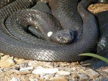 Serpiente negra imagenes de archivo