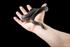 Serpiente negra a disposición Fotos de archivo libres de regalías