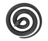 Serpiente negra torcida ilustración del vector