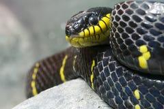 Serpiente negra y amarilla colorida Imágenes de archivo libres de regalías