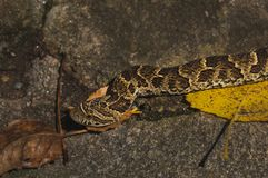 Serpiente que se arrastra en una roca foto de archivo